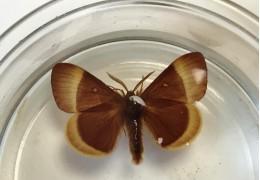 Dégraissage des papillons